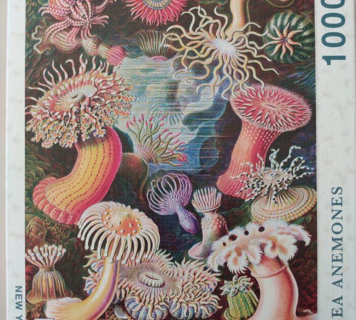 Sea Anemones 1000